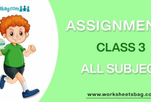Assignments For Class 3 Download PDF